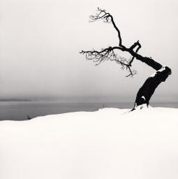 Michael Kenna - Kussharo Lake Tree, Study 5